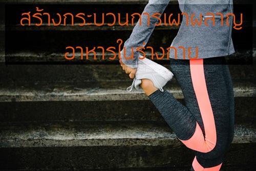 สร้างกระบวนการเผาผลาญอาหารในร่างกาย thaihealth