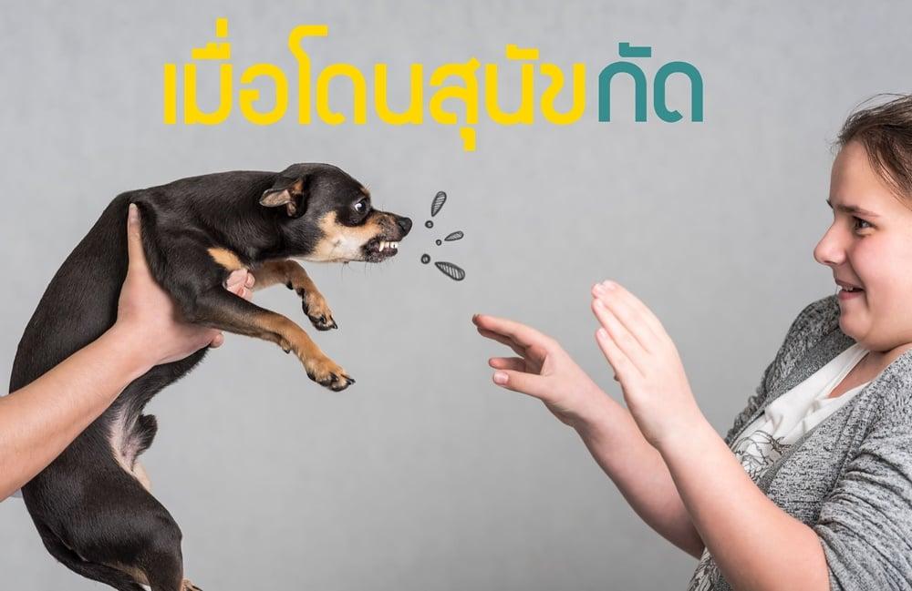 เมื่อโดนสุนัขกัด thaihealth