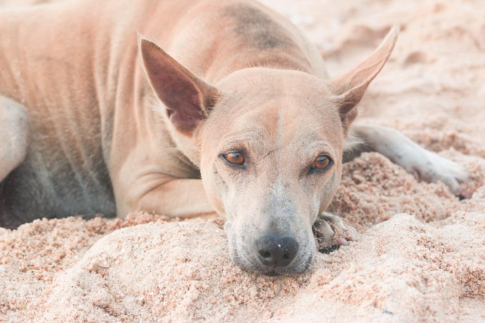 เตือน หมา-แมว กัด ข่วน รีบฉีดวัคซีนฯ thaihealth