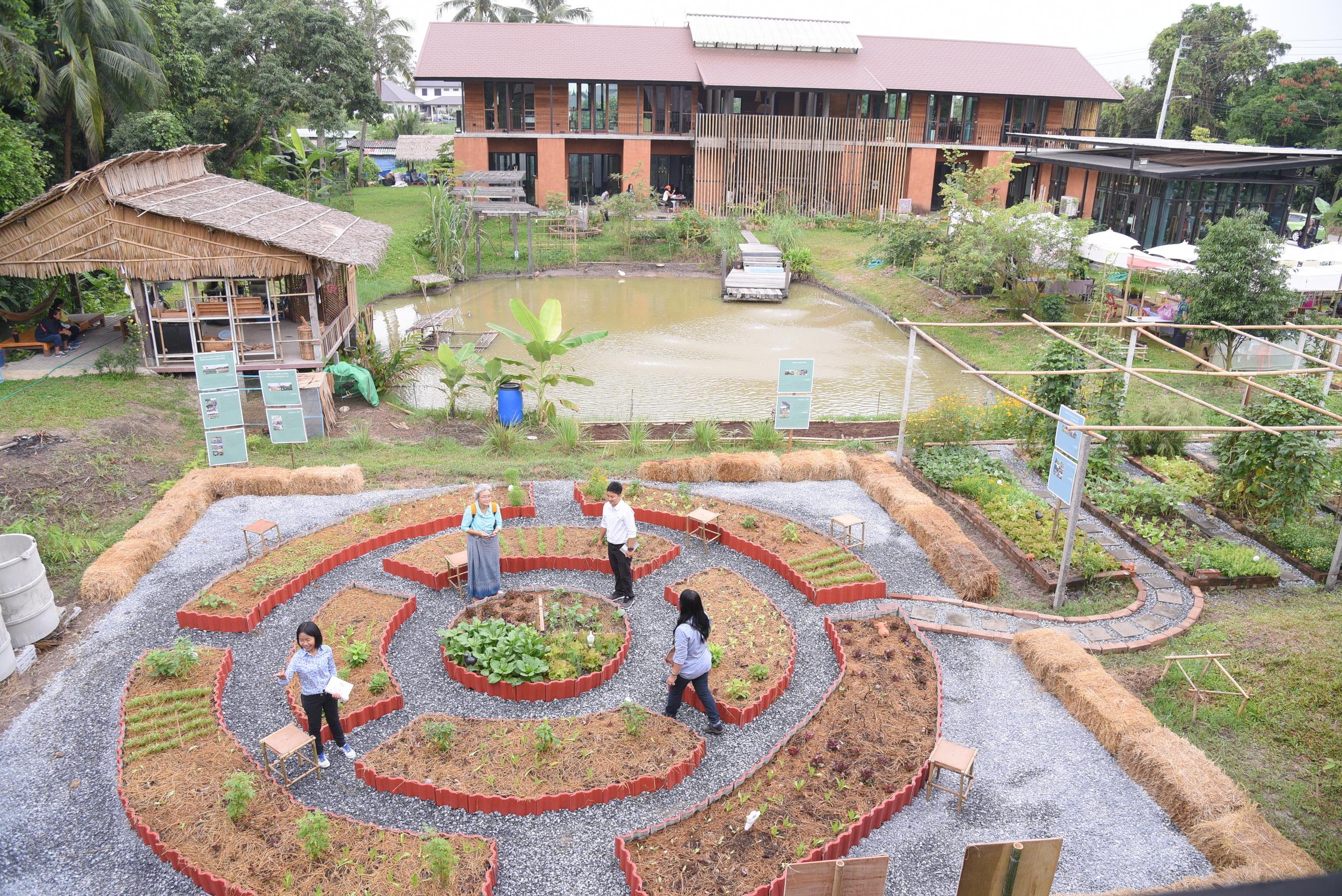 'สวนผักคนเมือง' แบ่งปันพื้นที่สร้างอาหารยั่งยืน thaihealth