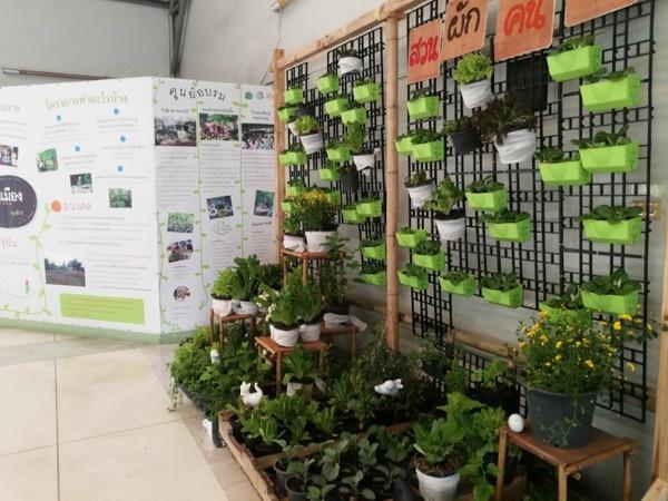 เทรนด์ 'สวนผักคนเมือง' สู่การสร้างประเทศยั่งยืน thaihealth