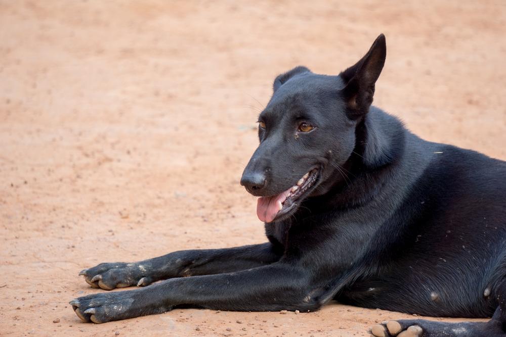 บัวใหญ่ เร่งฉีดยาทำหมันสุนัข หวั่นพิษสุนัขบ้าระบาดซ้ำ thaihealth