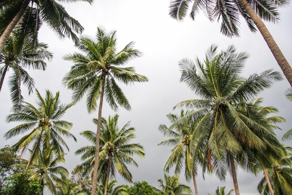 เตือน 29 จว .เหนือ-อีสาน-กลาง  เตรียมรับมือพายุฤดูร้อน thaihealth