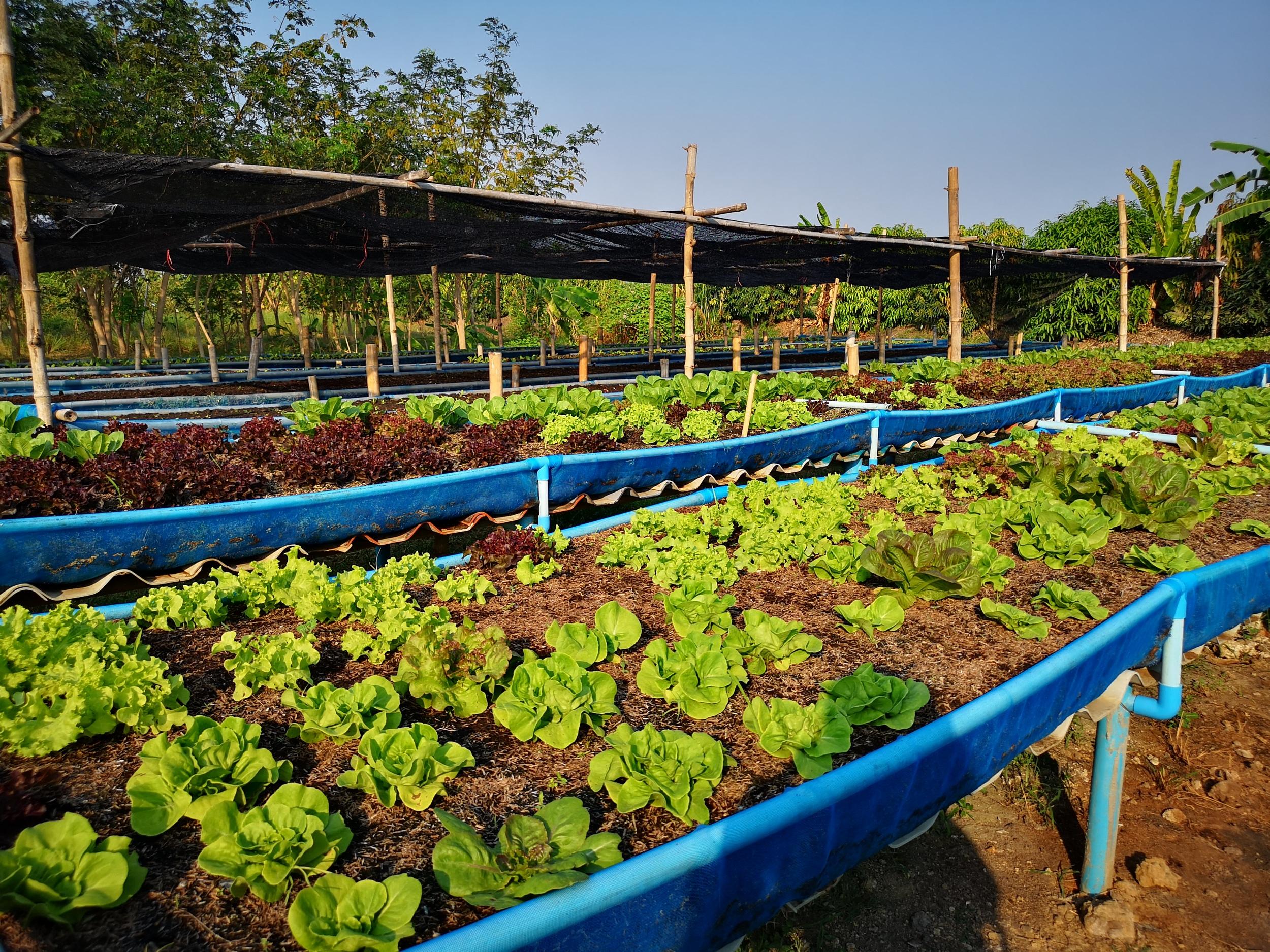 เมื่อ 'น้ำ' เปลี่ยนเกษตรเคมีสู่เกษตรอินทรีย์ thaihealth