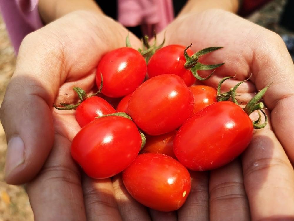 'เลมอนฟาร์ม' ชวนเกษตรกรปลูกผักอินทรีย์ป้อนตลาด thaihealth