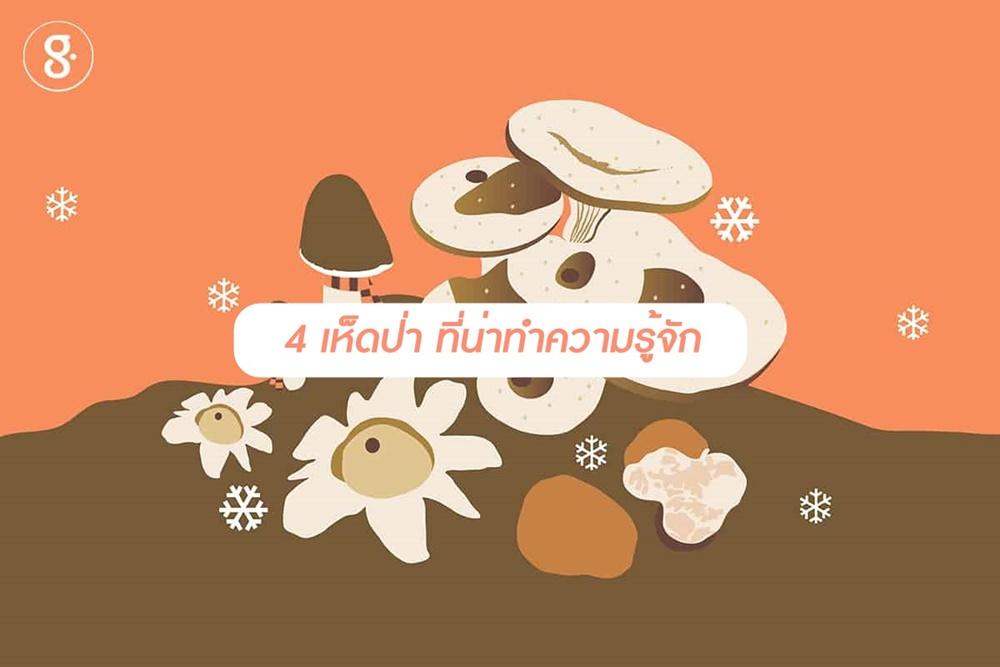 4 เห็ดป่า ที่น่าทำความรู้จัก thaihealth