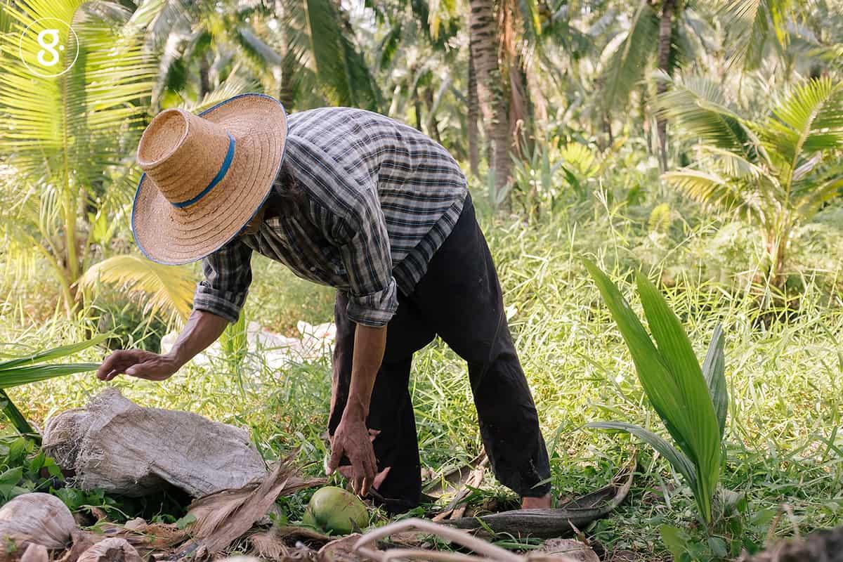 'วิทยา เลี้ยงรักษา' ชาวสวนผู้ปลูกมะพร้าวปลอดภัยให้เรากิน thaihealth