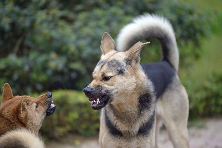 """แนะยึดหลัก """"คาถา 5 ย."""" ลดเสี่ยงรับเชื้อพิษสุนัขบ้า  thaihealth"""
