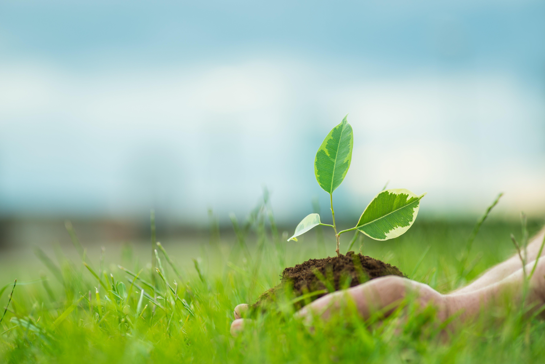 ปลูก (ต้นไม้) เปลี่ยนโลก หยุด