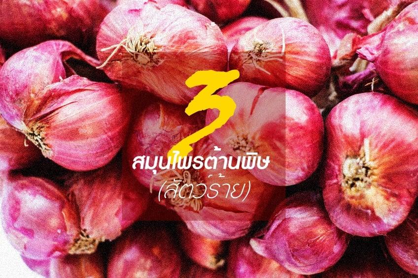 3 สมุนไพรต้านพิษ (สัตว์ร้าย) thaihealth