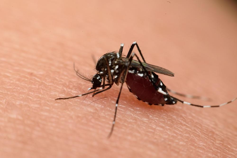 จ.นครพนม ระดมกำลังแก้ปัญหาไข้เลือดออก thaihealth