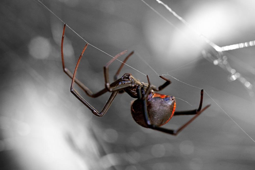 แพทย์ผิวหนังเตือนระวังแมงมุมมีพิษกัด thaihealth