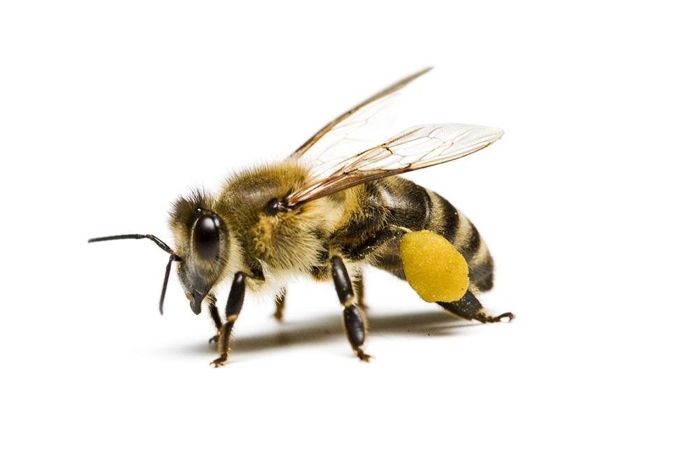 ผู้ที่ถูกแมลงมีพิษกัด ต่อย ควรรีบไปพบแพทย์ thaihealth