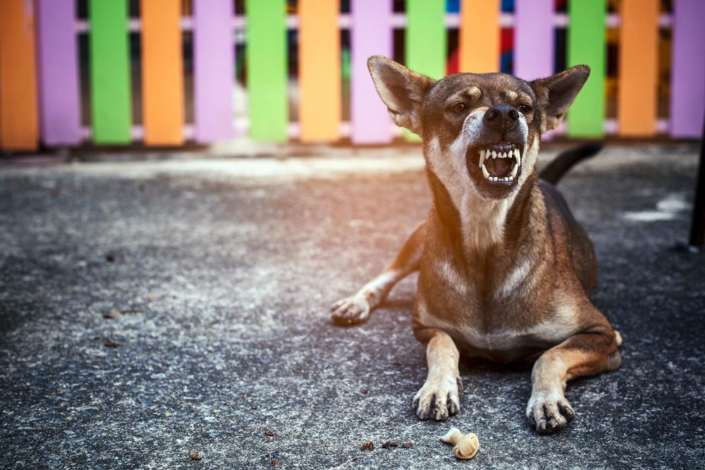 โรคพิษสุนัขบ้า ป้องกันได้ด้วยวัคซีน thaihealth