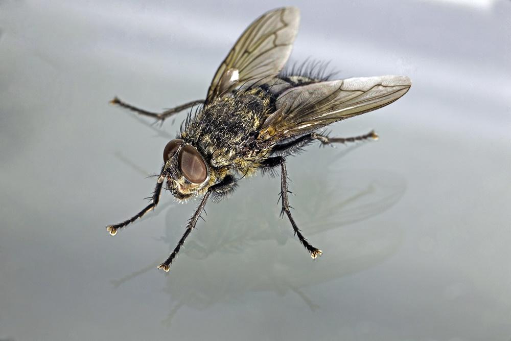 ระวังโรคติดต่อทางเดินอาหารจากแมลงวัน  thaihealth
