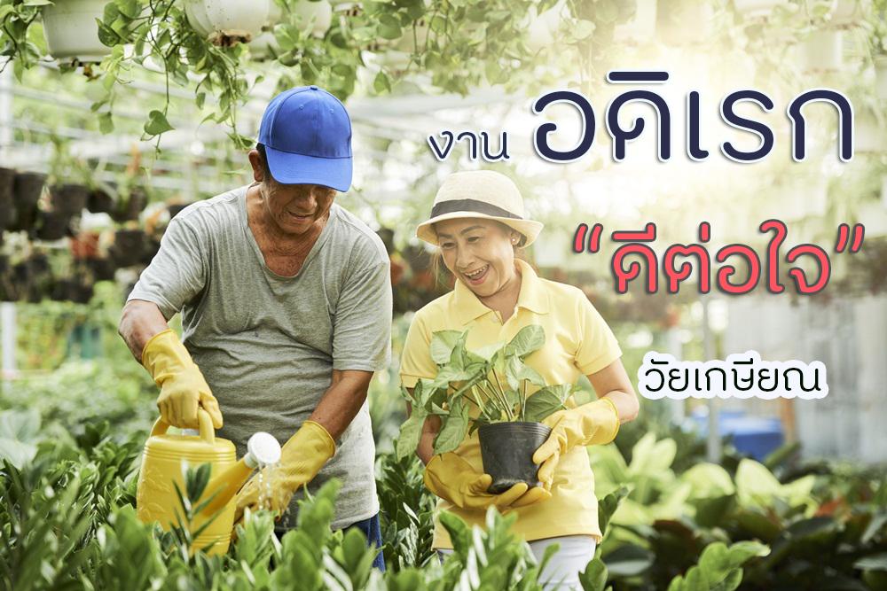 งานอดิเรก ดีต่อใจวัยเกษียณ thaihealth