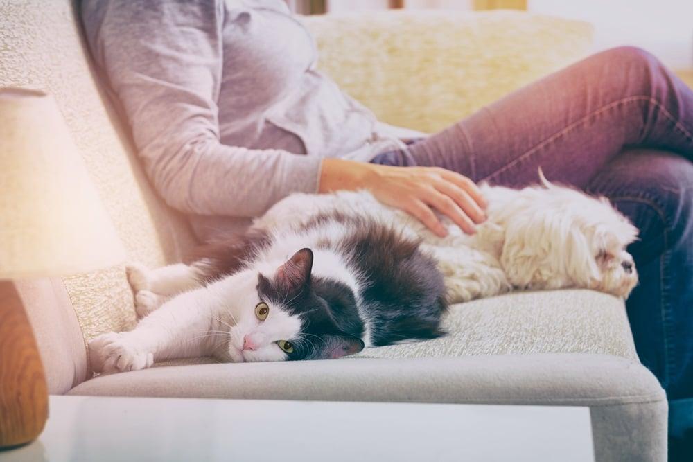 แนะดูแลสัตว์เลี้ยงให้ถูกสุขลักษณะ thaihealth
