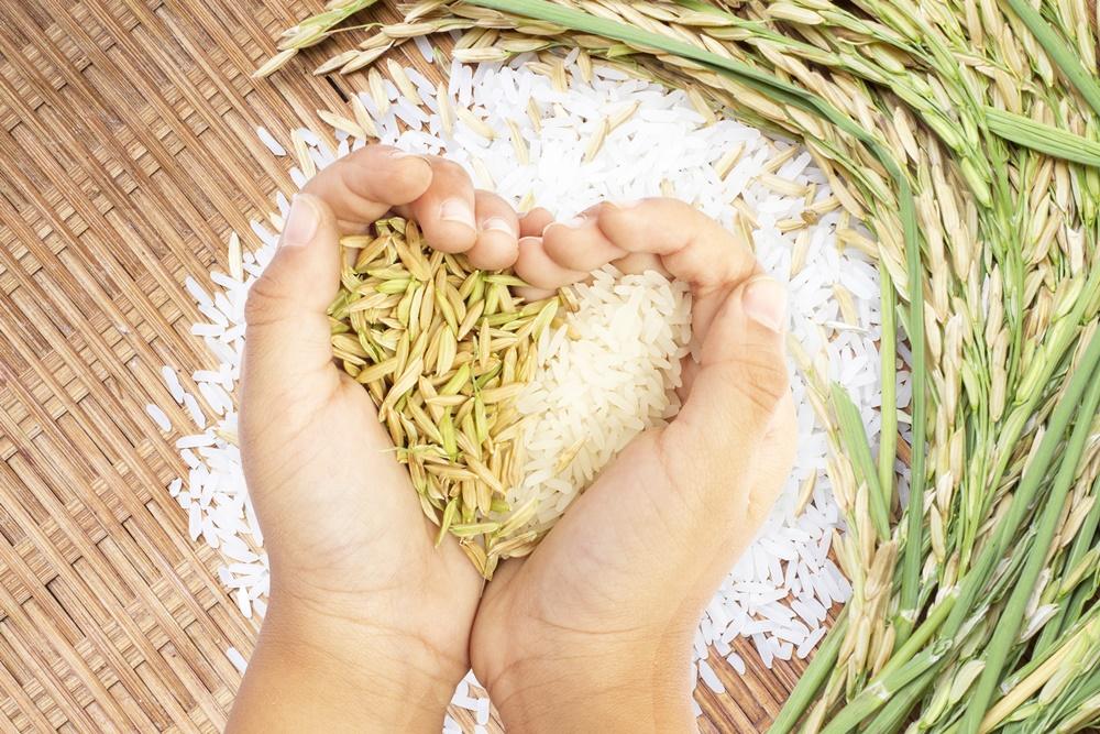 เพิ่มมูลค่าข้าวไทย เป็นอาหารผู้ป่วยเบาหวาน thaihealth