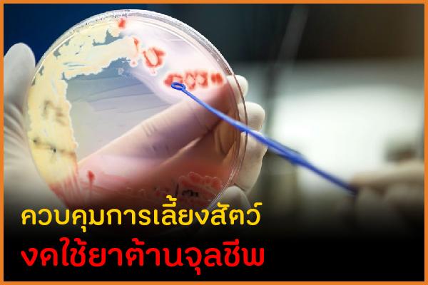 ควบคุมการเลี้ยงสัตว์ งดใช้ยาต้านจุลชีพ thaihealth