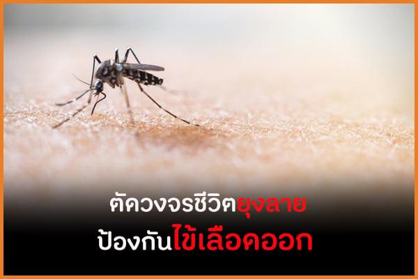 ตัดวงจรชีวิตยุงลาย ป้องกันไข้เลือดออก thaihealth