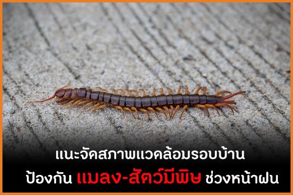 แนะจัดสภาพแวดล้อมรอบบ้าน ป้องกัน แมลง-สัตว์มีพิษ ช่วงหน้าฝน thaihealth