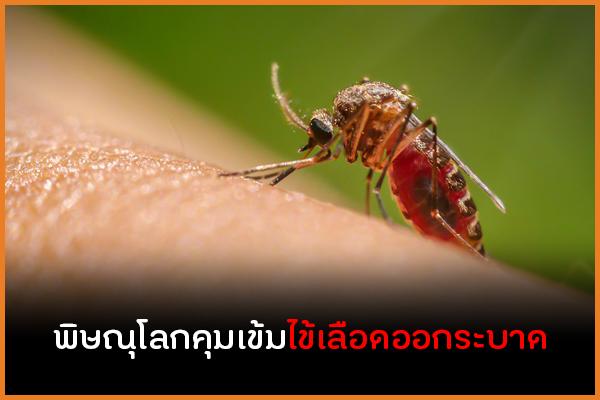 พิษณุโลกคุมเข้มไข้เลือดออกระบาด thaihealth