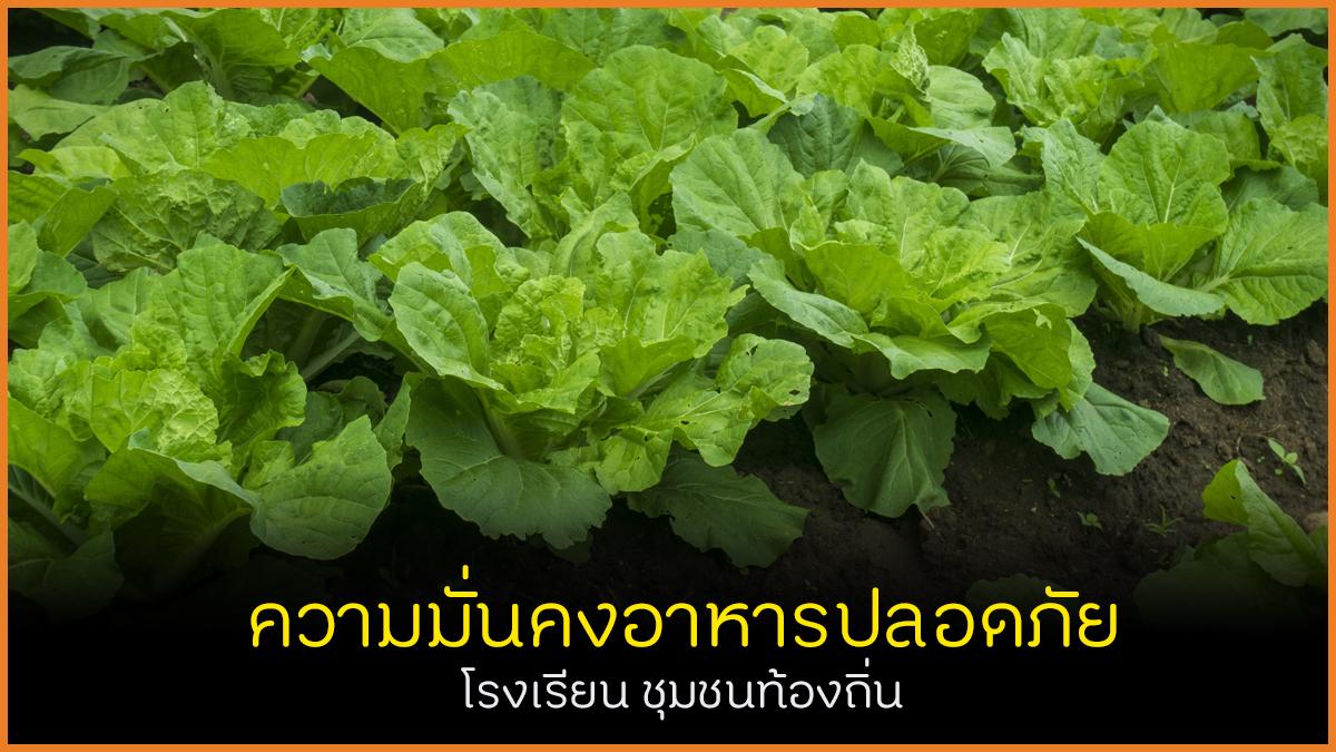 ความมั่นคงอาหารปลอดภัย โรงเรียน ชุมชนท้องถิ่น thaihealth