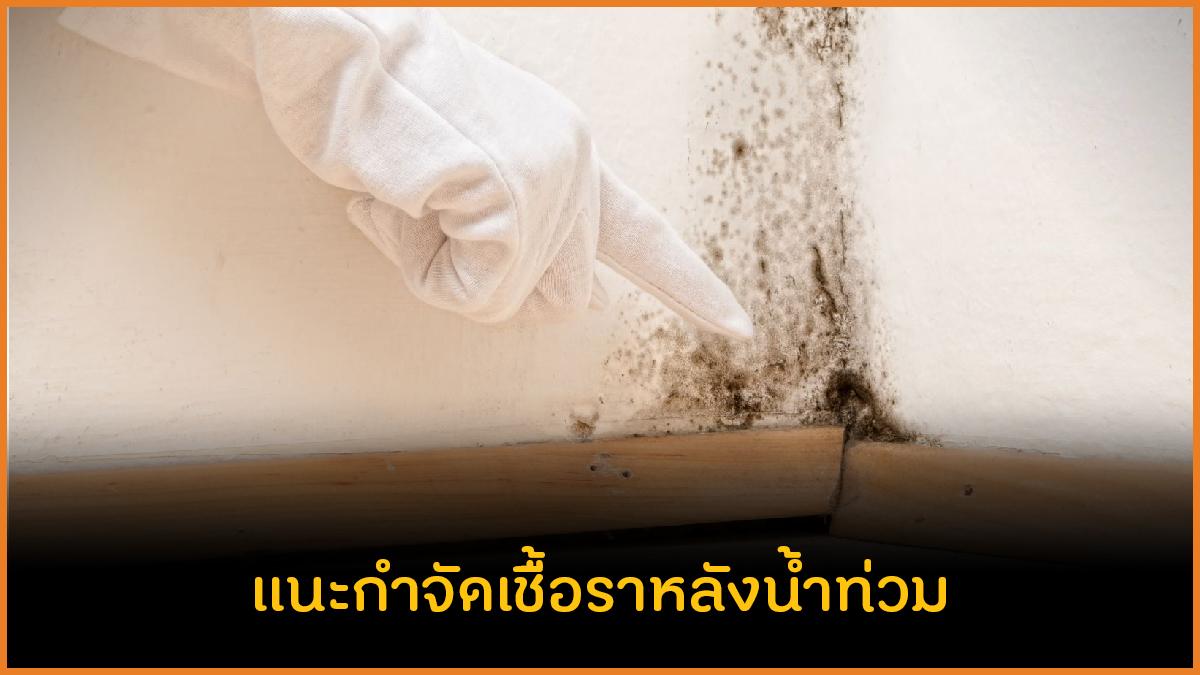 แนะกำจัดเชื้อราหลังน้ำท่วม thaihealth