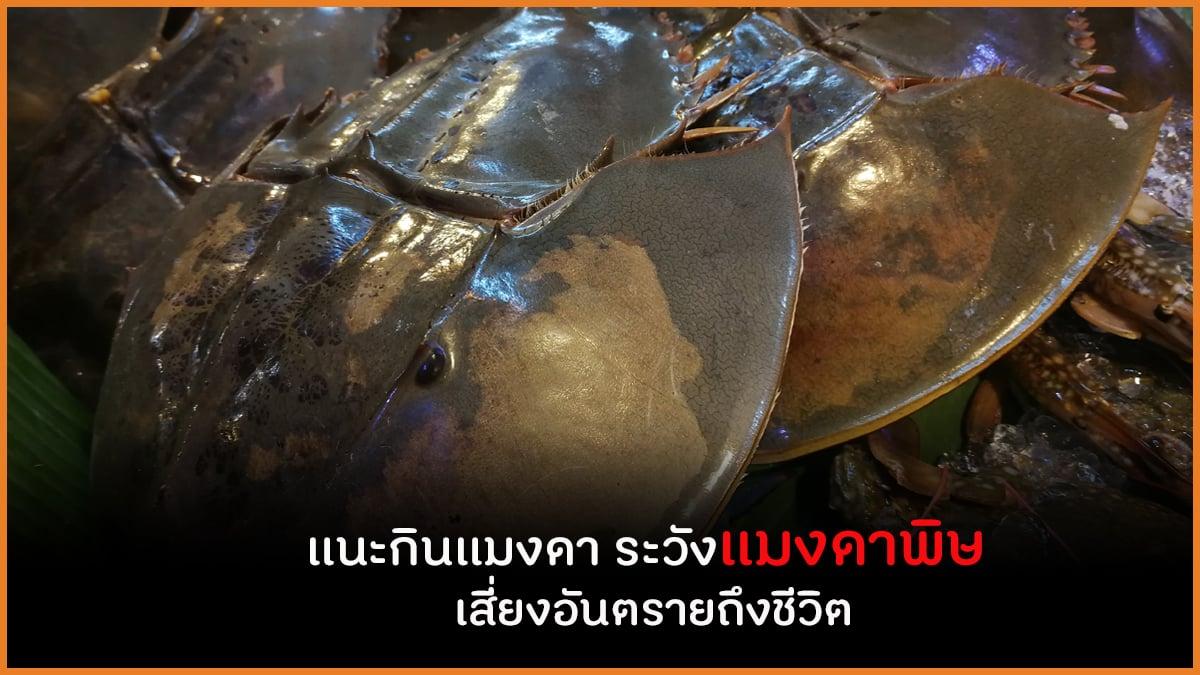 แนะกินแมงดา ระวังแมงดาพิษ เสี่ยงอันตรายถึงชีวิต thaihealth